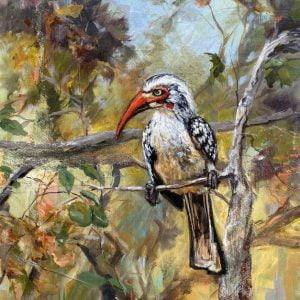 A Painting about a Southern Red-billed Hornbill